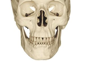 esqueleto_humano_10