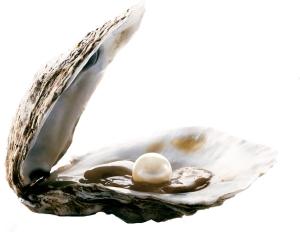 oyster-cc3b3pia